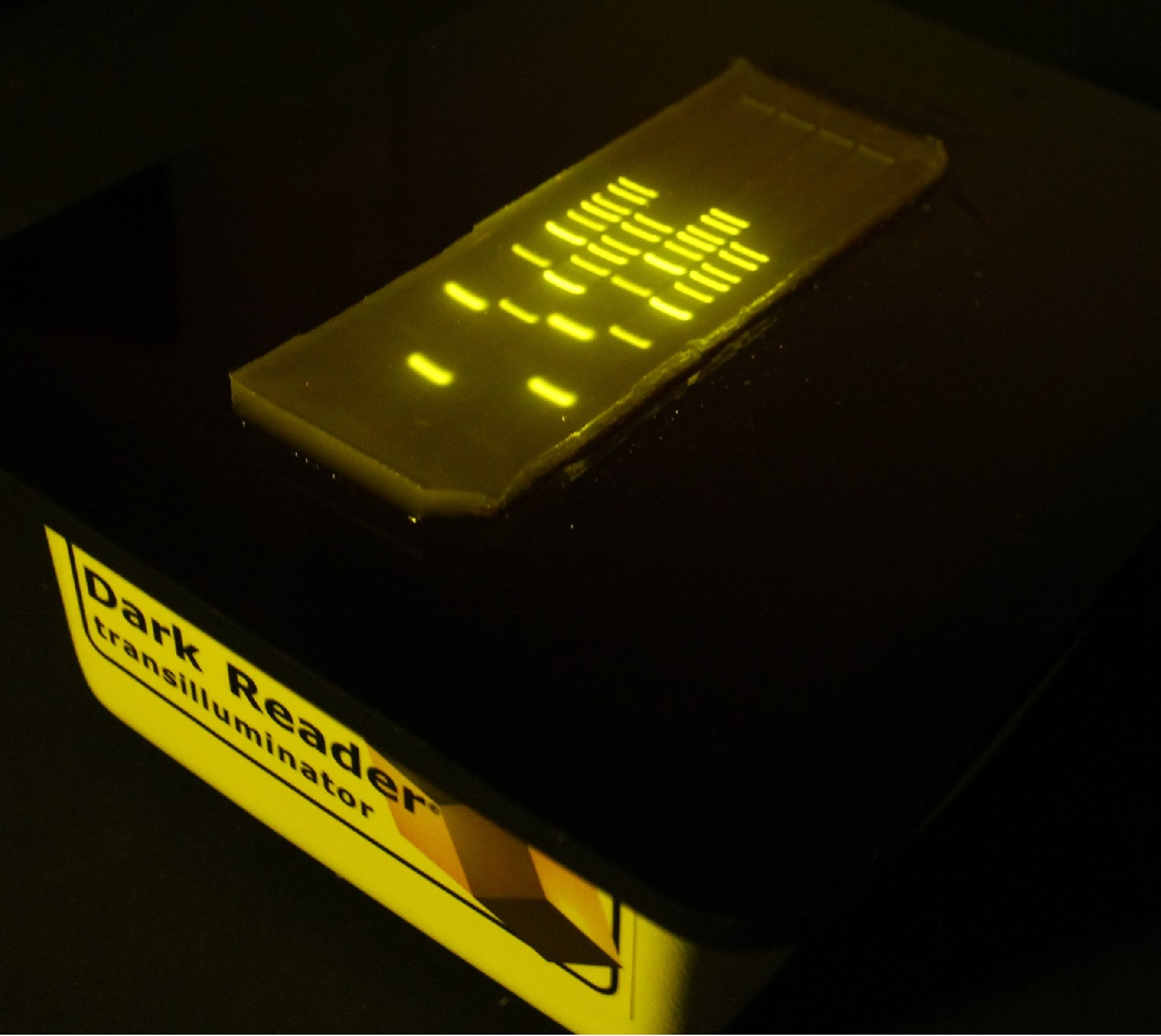 Image of a DNA gel on top of a transilluminator