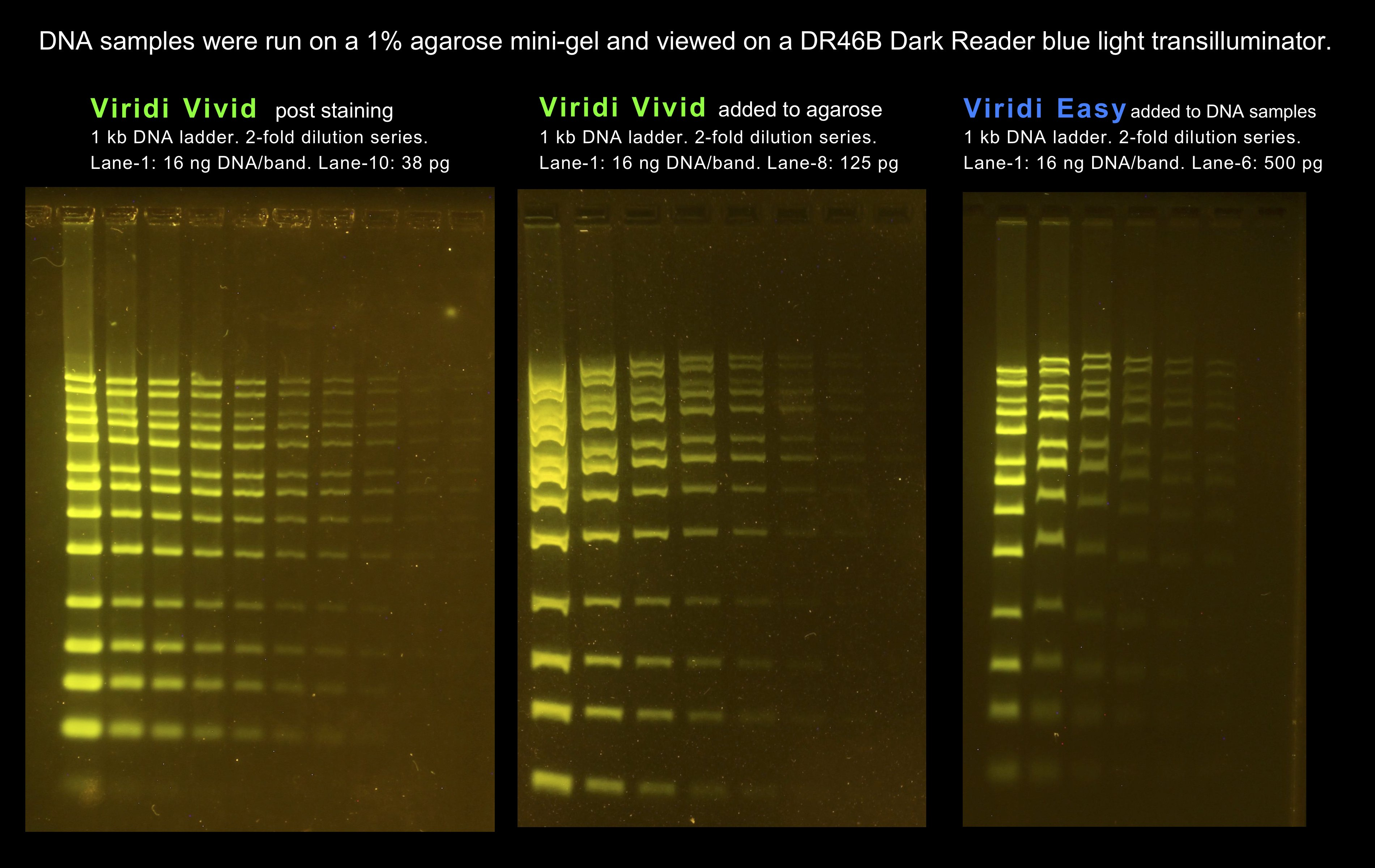 Image of side-by-side gel comparisons of the new Viridi DNA stains