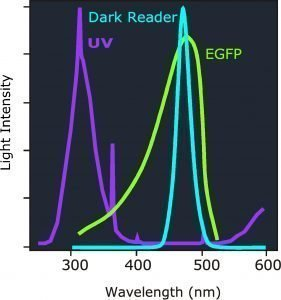 Image of EGFP excitation spectra