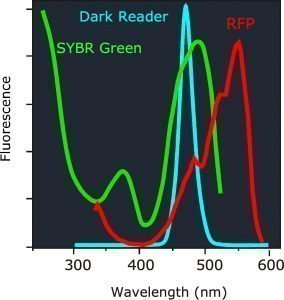 Image of SYBR green vs RFP