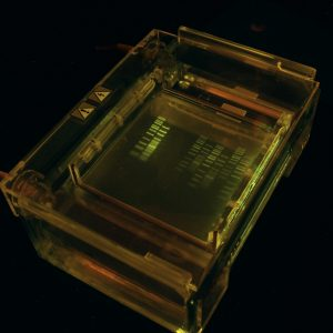Image of DNA gel in a plastic box
